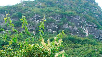 標高の高いエリアに自生する蜜源植物を厳選