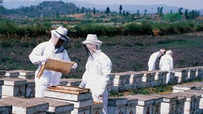 蜜源の周辺環境を事前調査