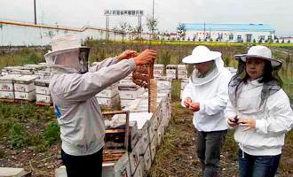 事前調査/養蜂家