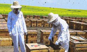養蜂作業管理